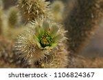 desert sonora. cactus flower | Shutterstock . vector #1106824367