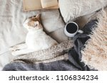 Stock photo cute ginger cat is sleeping in the bed on warm blanket cold autumn or winter weekend while reading 1106834234