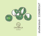 chlorella  chlorella seaweed.... | Shutterstock .eps vector #1106883167