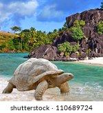 Stock photo giant tortoise on sand 110689724