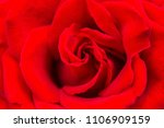 detail of red roses in the... | Shutterstock . vector #1106909159