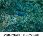coral and small fish from the... | Shutterstock . vector #1106920331