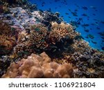 coral and small fish from the... | Shutterstock . vector #1106921804