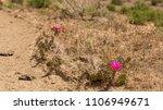 Grand Valley Colorado Blooming...