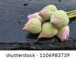 a red lotus flower bud against... | Shutterstock . vector #1106983739