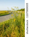 flowering oriental salsify ...   Shutterstock . vector #1107000035