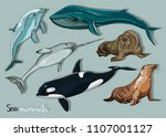 sea mammals animal collection... | Shutterstock .eps vector #1107001127