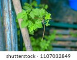 gardening in the summer house... | Shutterstock . vector #1107032849