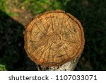 cross section of a tree | Shutterstock . vector #1107033071