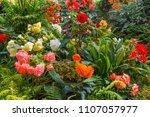 magnificent blooming flower...   Shutterstock . vector #1107057977