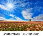 bright sun warms wonderful...   Shutterstock . vector #1107058004