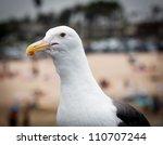 Close Up Profile Of A Seagull...