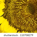 full frame sunflower detail - stock photo