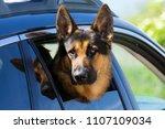 german shepherd in car | Shutterstock . vector #1107109034
