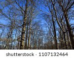 leafless trees in woodland... | Shutterstock . vector #1107132464