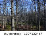 leafless trees in woodland... | Shutterstock . vector #1107132467