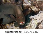Small photo of redmouth grouper (aethaloperca rogaa)