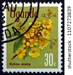 Small photo of CROATIA ZAGREB, 19 MAY 2018: a stamp printed in Uganda shows Ochna Ovata, Tropical Evergreen Tree, circa 1969