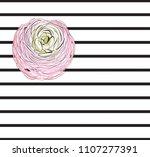 pink rose flower  two stripes... | Shutterstock .eps vector #1107277391
