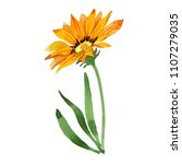 yellow ganzania. floral... | Shutterstock . vector #1107279035