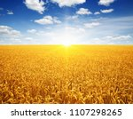 wheat field and sun in the sky  | Shutterstock . vector #1107298265