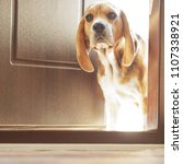dog on the doorstep of the... | Shutterstock . vector #1107338921