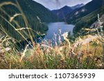 various flowers and grass in... | Shutterstock . vector #1107365939