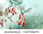 Red Berries Winter Nature With...