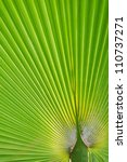 Leaves Of Palm Tree  Detail Shot