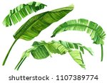 tropical plants  green leaves... | Shutterstock . vector #1107389774