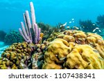 coral reef in carbiiean sea off ... | Shutterstock . vector #1107438341