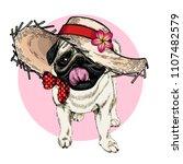 vector portrait of pug dog...   Shutterstock .eps vector #1107482579