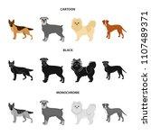 dog breeds cartoon black... | Shutterstock . vector #1107489371