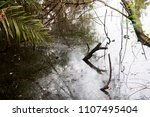 the wetland with the trees... | Shutterstock . vector #1107495404