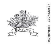 vector hand drawn herbs and... | Shutterstock .eps vector #1107520637