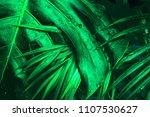 tropical wet bright green... | Shutterstock . vector #1107530627