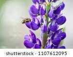pollination. bee flies and... | Shutterstock . vector #1107612095