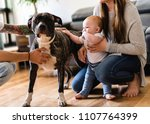 baby girl touch pitbull at home ... | Shutterstock . vector #1107764399