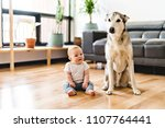 baby girl sitting with husky on ... | Shutterstock . vector #1107764441