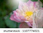 vesak day  buddhist lent day ... | Shutterstock . vector #1107776021