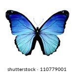 Stock photo morpho blue butterfly isolated on white 110779001