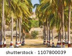 a beautiful palm grove or... | Shutterstock . vector #1107800039