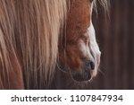 palomino horse portrait  accent ...   Shutterstock . vector #1107847934