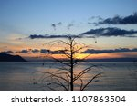 sunset over the solitaire tree... | Shutterstock . vector #1107863504