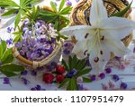 the petals of a blooming lupine.... | Shutterstock . vector #1107951479