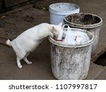 white belly cat looking for... | Shutterstock . vector #1107997817