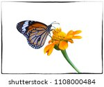 Stock photo butterfly and flower isolated on white background 1108000484