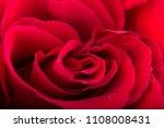 colorfull flowers studio shot | Shutterstock . vector #1108008431