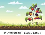 tomato plant on a field in... | Shutterstock .eps vector #1108013537
