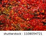 Autumn Season Leaf In Japan